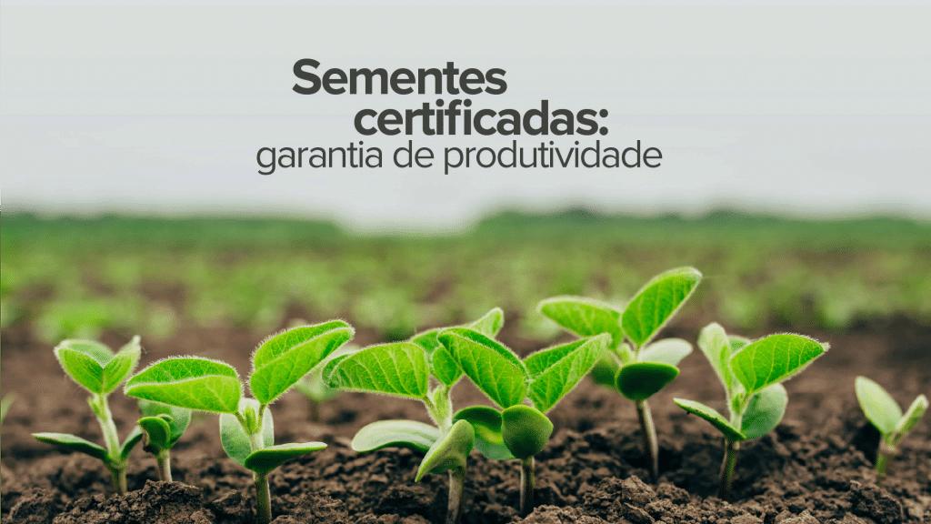 Sementes certificadas: garantia de produtividade