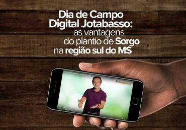 Dia de Campo digital Jotabasso: as vantagens do plantio de sorgo na região sul do MS