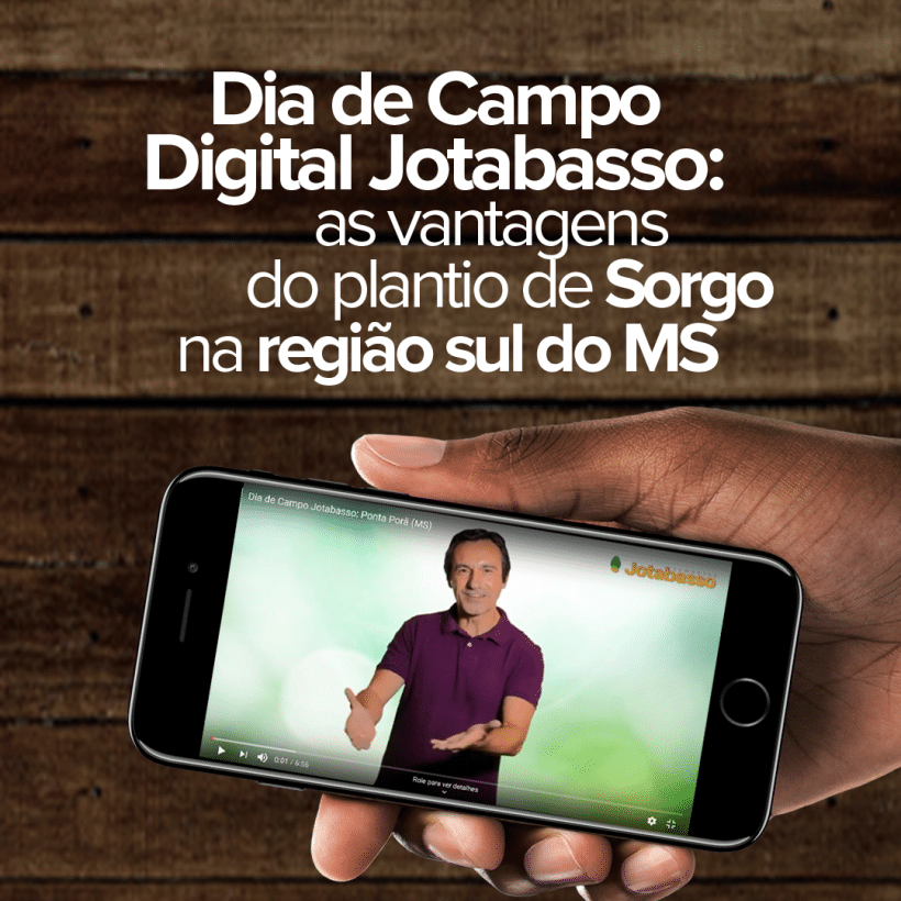 Dia de Campo digital Jotabasso: as vantagens do plantio de sorgo na região sul do MS