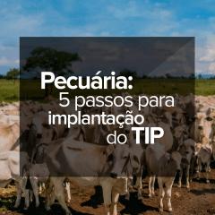 pecuaria-5-passos-para-implantacao-do-tip