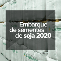 embarque-de-sementes-de-soja-2020
